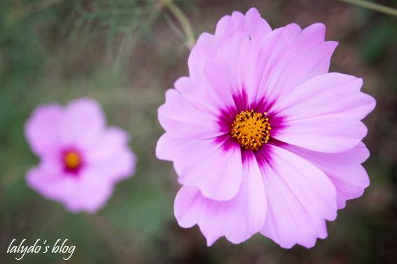 fleurs-parc-galea-1