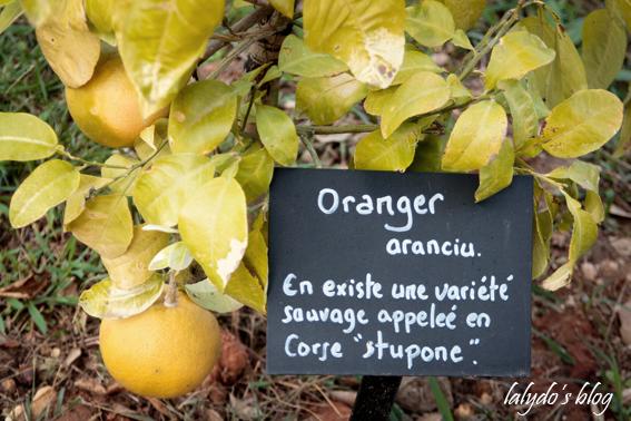 oranger-parc-galea