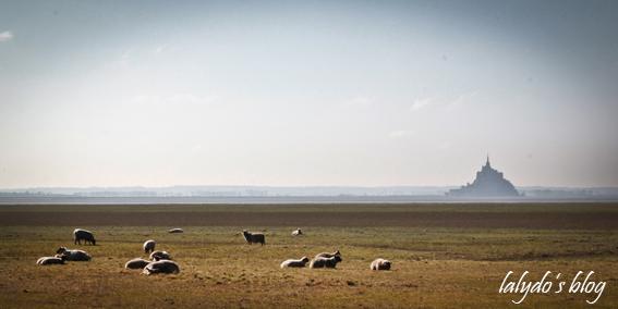 mont-saint-michel-et-moutons