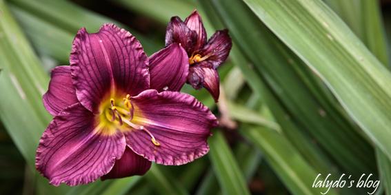 fleur-jardins-de-la-ballue