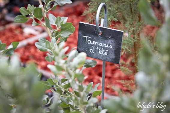 tamaris-la-gacilly