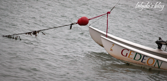 ile-tudy-bateau-2