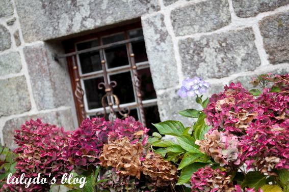 fleurs-locronan