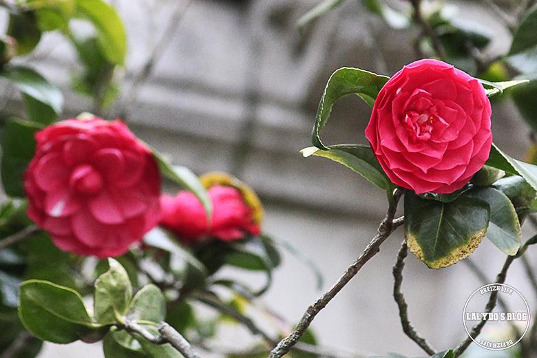fleurs dinan lalydo blog