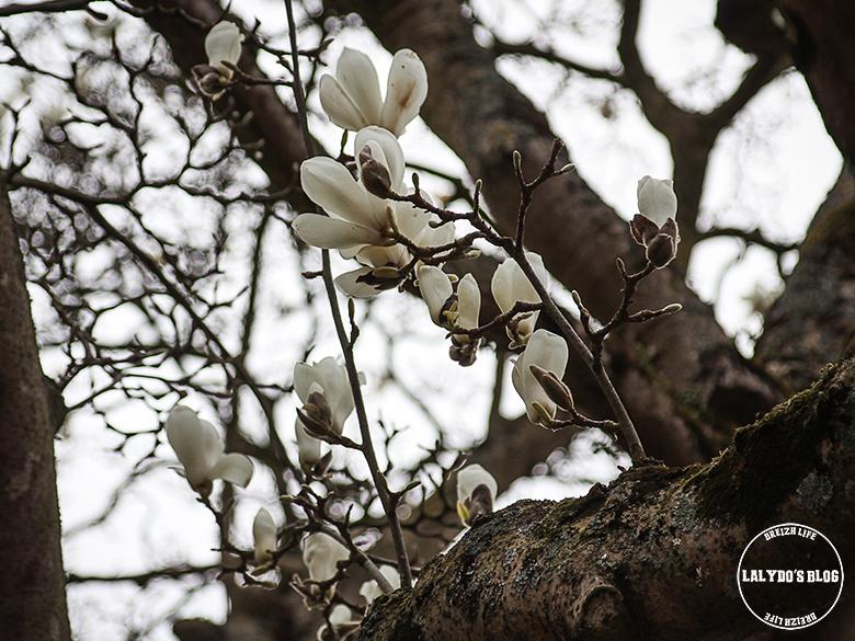 magnolia dinan lalydo blog
