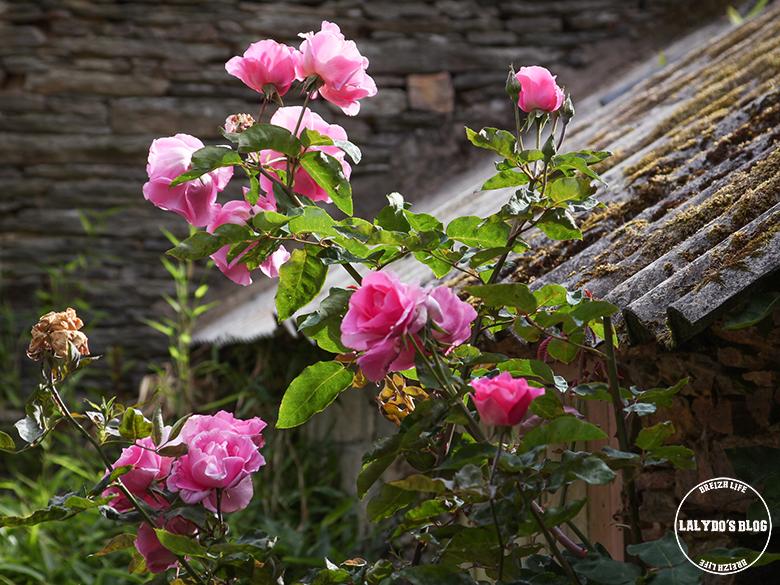 jardin malestroit lalydo blog 2