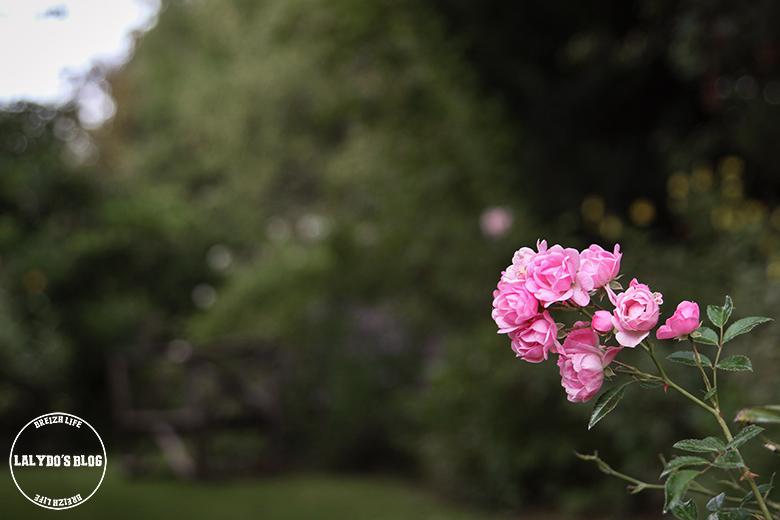 jardin-de-roquelin-lalydo-blog