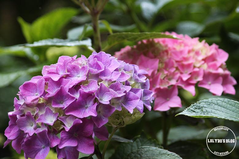 abbaye de beauport fleurs lalydo blog 2