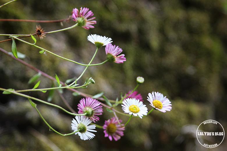 brehat fleurs lalydo blog 2