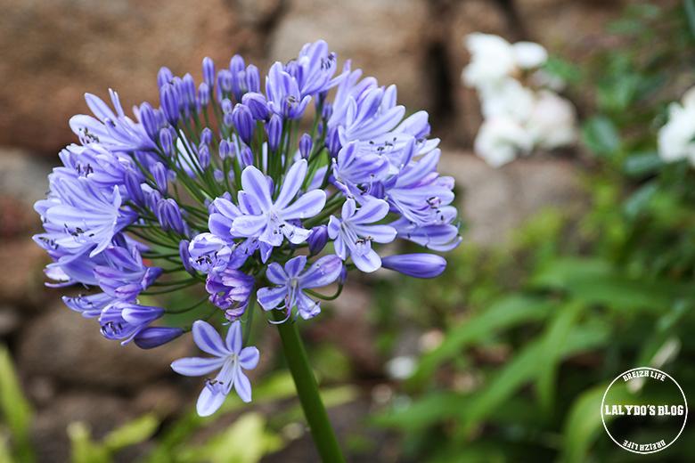 brehat fleurs lalydo blog