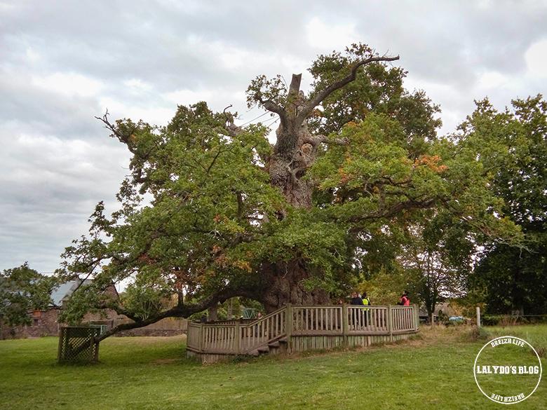 foret broceliande arbre guillotin 1