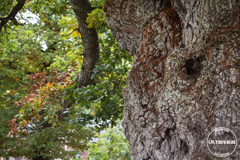 foret broceliande arbre guillotin 2