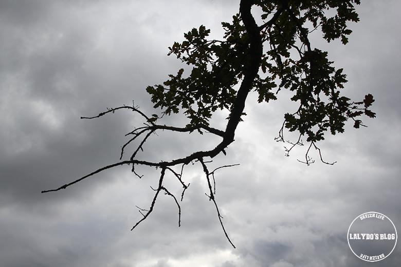 foret broceliande arbre guillotin 3