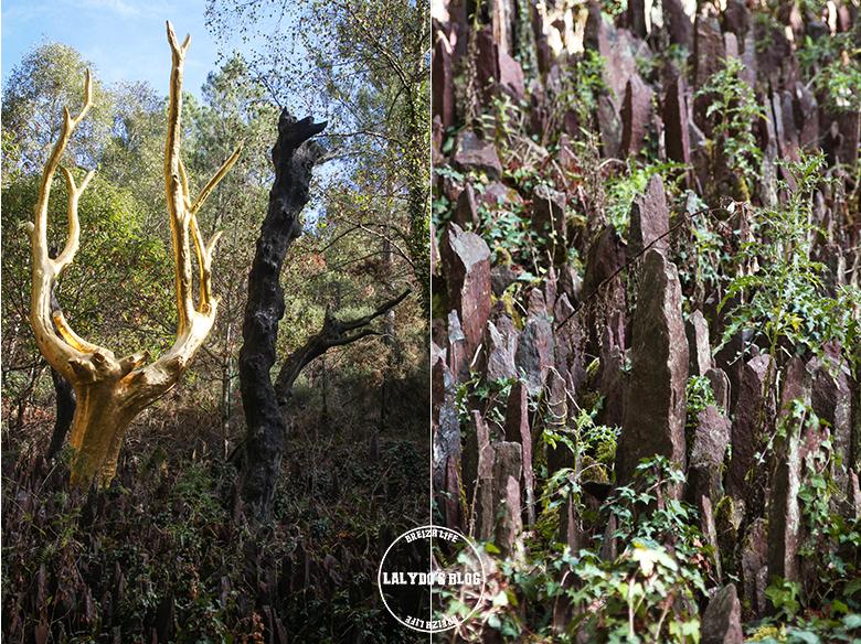 foret broceliande arbre or 1