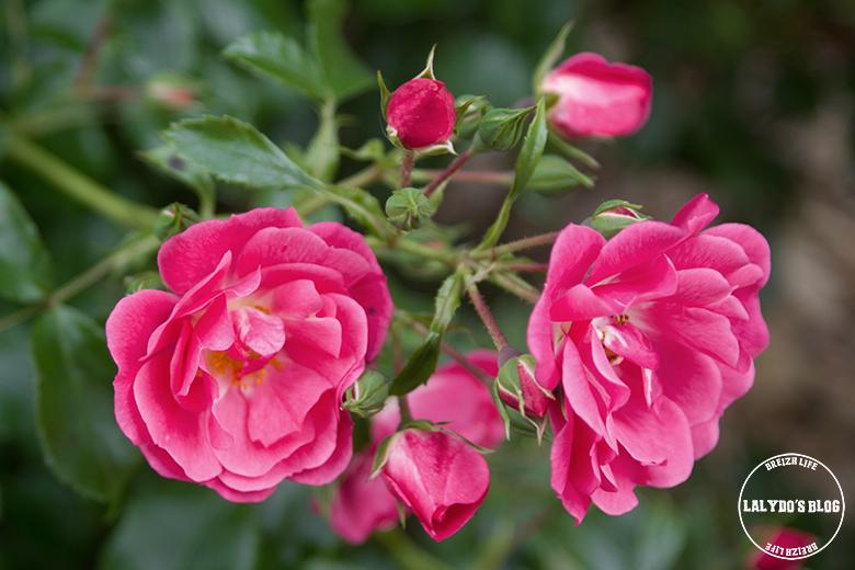 saint nazaire jardin plantes 1