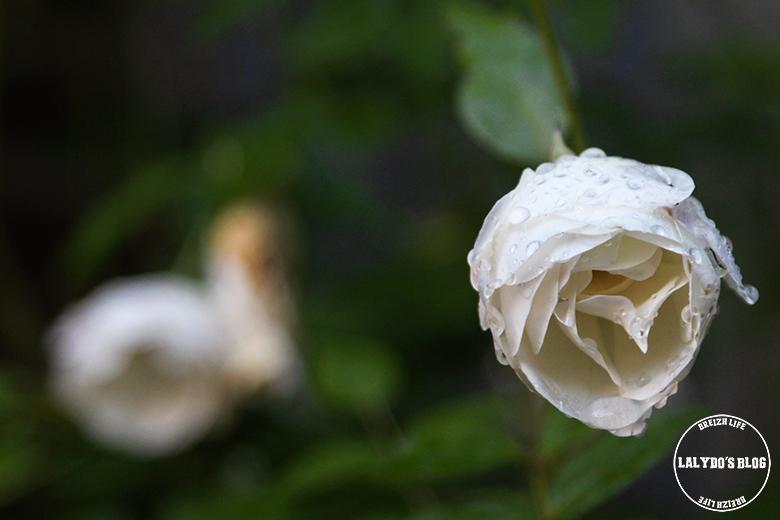 cour sainte catherine honfleur lalydo blog 14