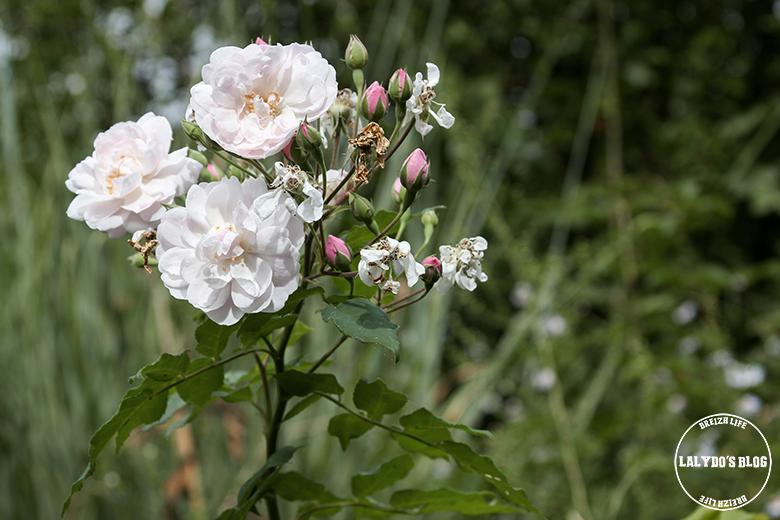 jardins de roquelin lalydo blog 18
