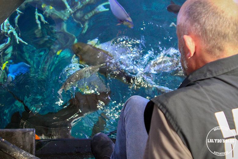 cherbourg cite de la mer lalydo 10