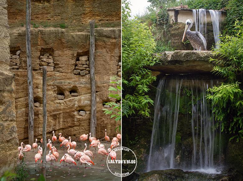 Bioparc doue la fontaine 4