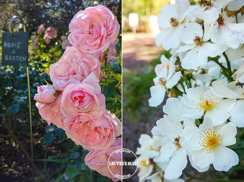 Chemin des roses doue la fontaine 1