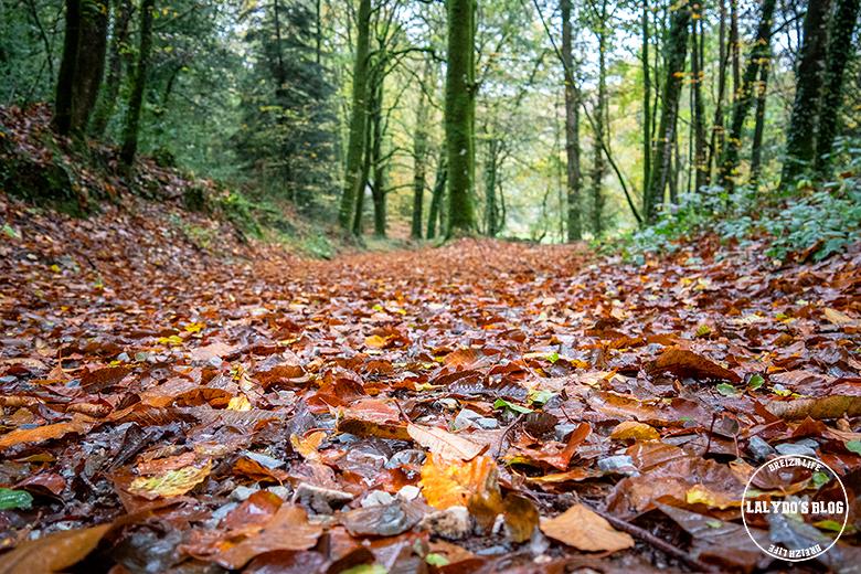 automne kreiz breizh nature bois beaucours 22