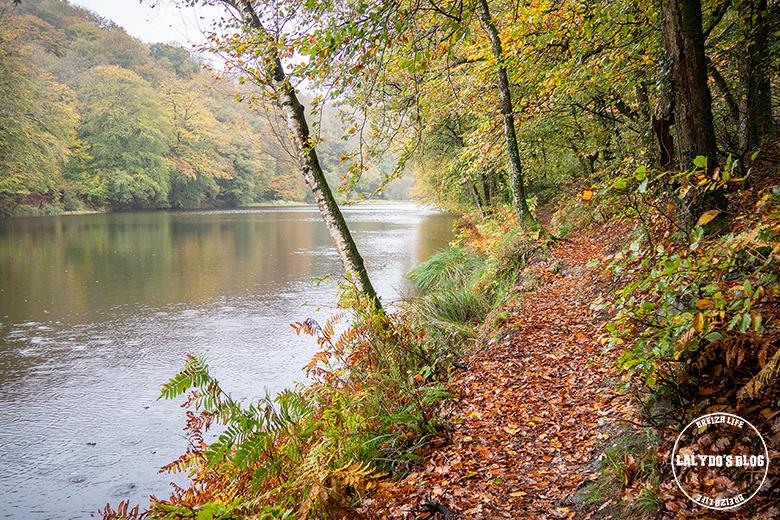 automne kreiz breizh nature bois beaucours 24