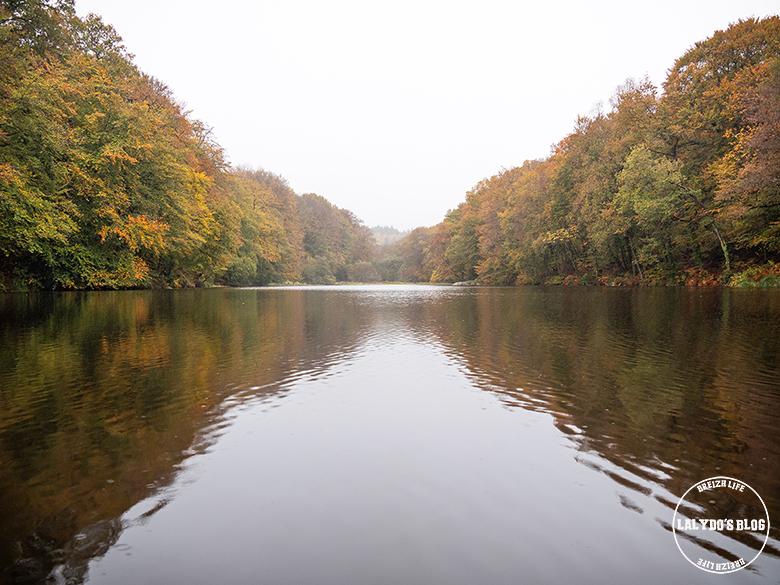 automne kreiz breizh nature bois 5 22