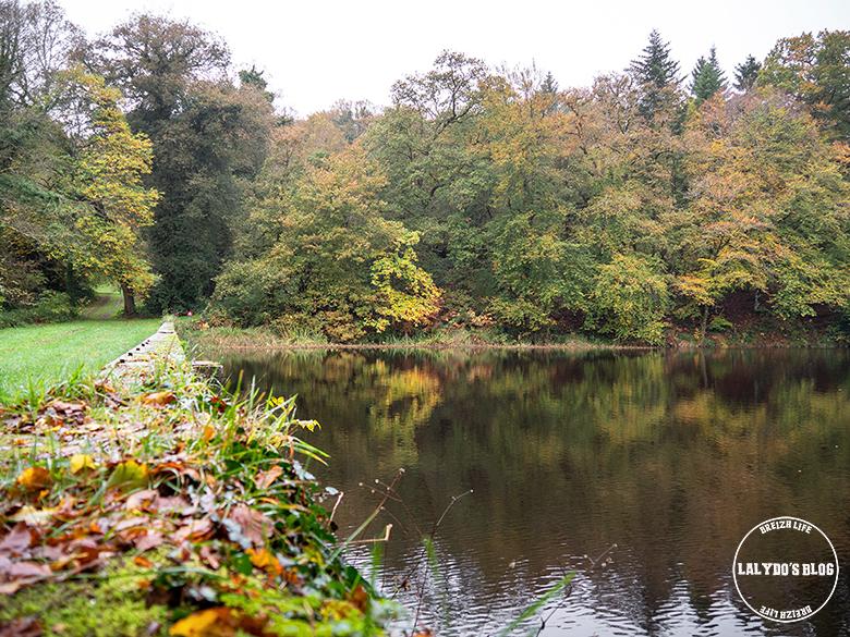 automne kreiz breizh nature bois beaucours 27