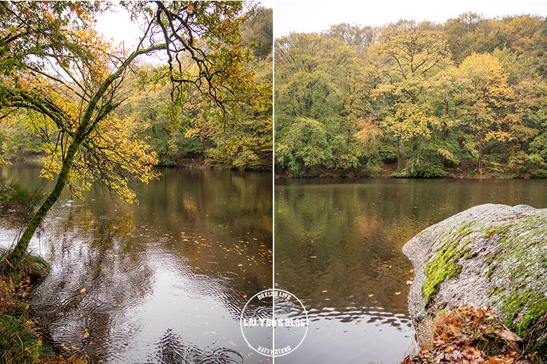 automne kreiz breizh nature bois beaucours 28
