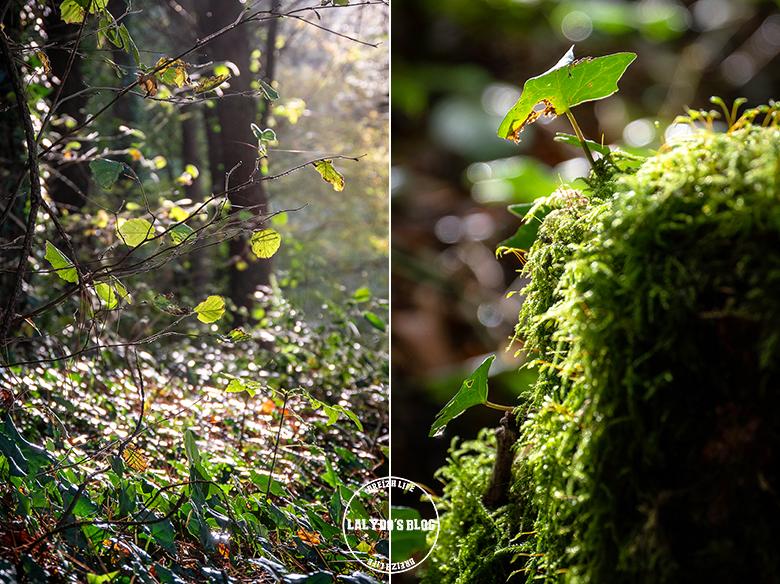 automne kreiz breizh nature lac kerne uhel 37