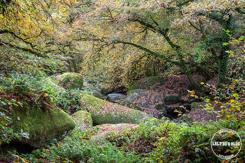 automne kreiz breizh nature toul goulic 20