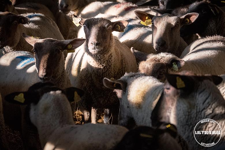 100 lieux qu il faut voir moutons pres sales 1