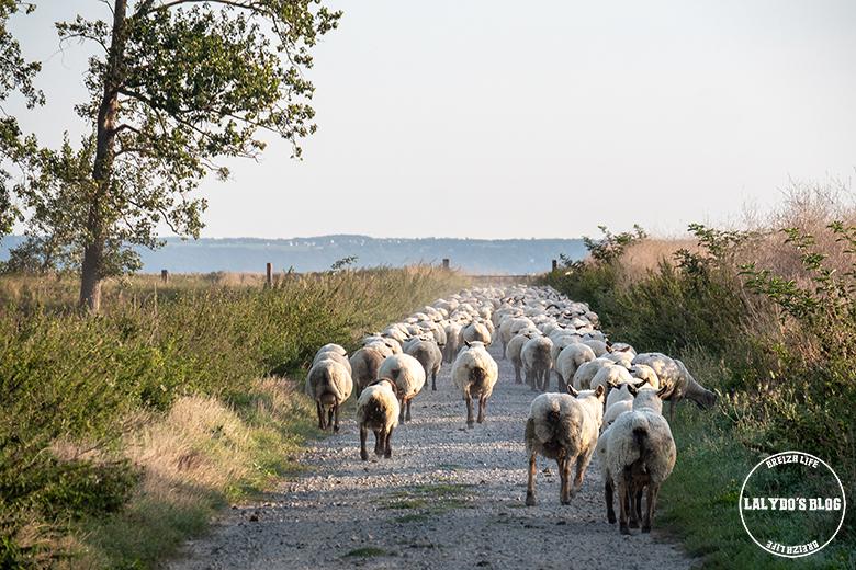 100 lieux qu il faut voir moutons pres sales 2