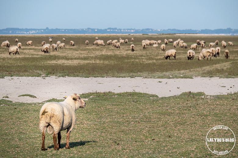 100 lieux qu il faut voir moutons pres sales 3
